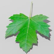 Gewone esdoornblad (Acer pseudoplatanus) 3d model