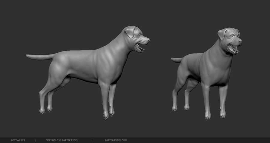 Dog Rottweiler royalty-free 3d model - Preview no. 5