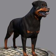 Hund Rottweiler 3d model
