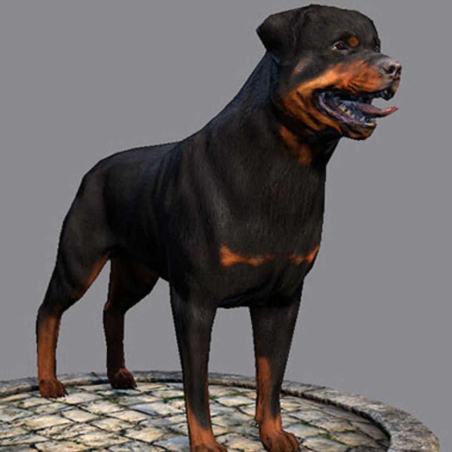 Dog Rottweiler 3D Model $12 - .ztl .oth .obj .max .fbx - Free3D