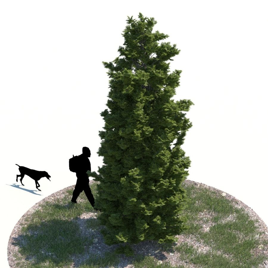 Thuja Tree 07 royalty-free 3d model - Preview no. 3