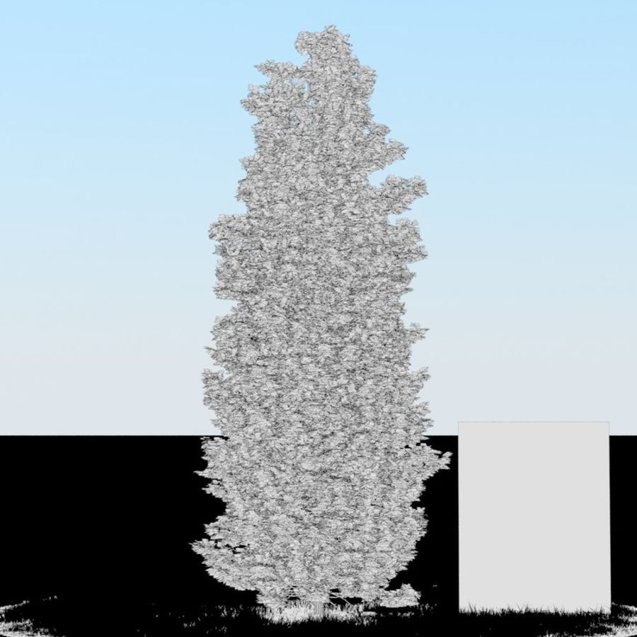 Thuja Tree 07 royalty-free 3d model - Preview no. 4
