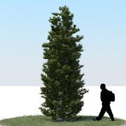 Thuja Tree 07 3d model