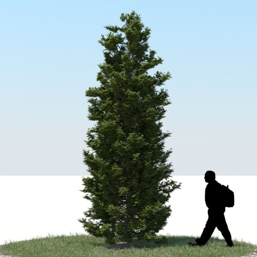 Thuja Tree 07 royalty-free 3d model - Preview no. 1
