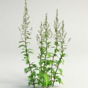 mugwort, common wormwood artemisia vulgaris 3d model