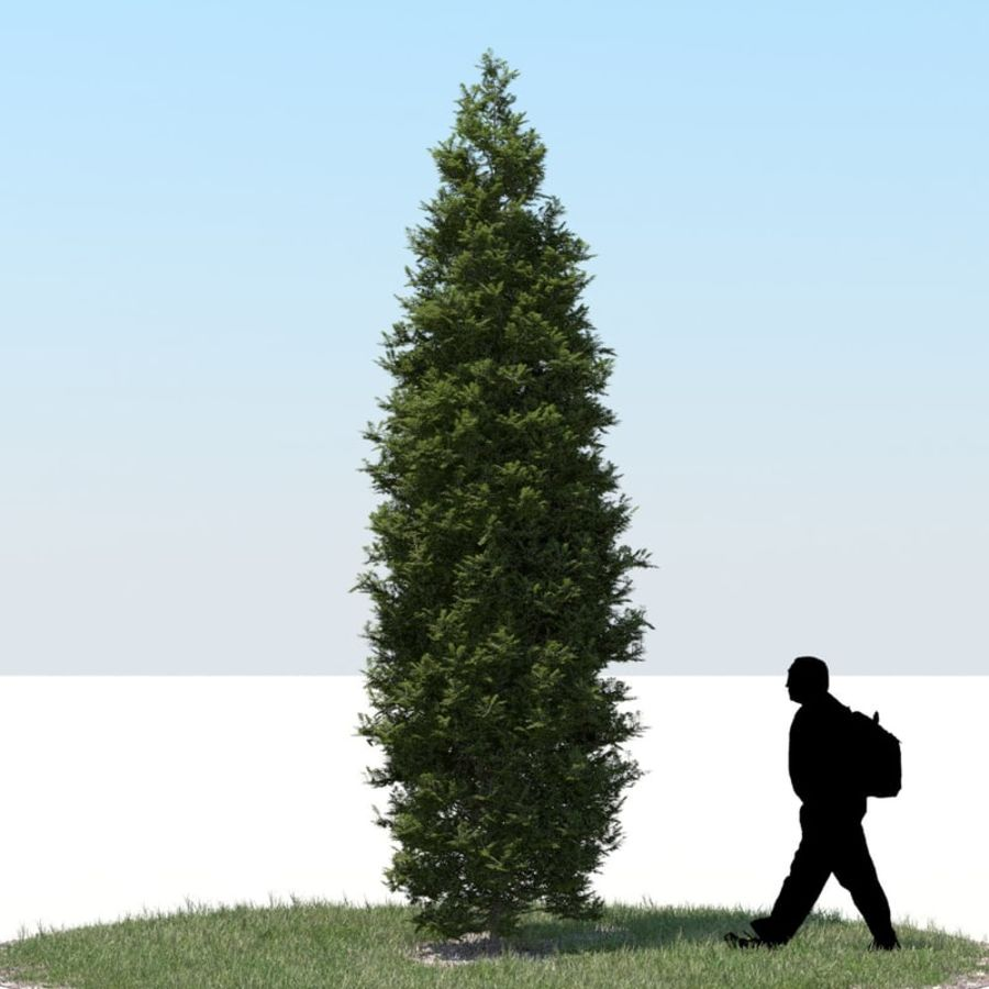 Thuja Tree 05 royalty-free 3d model - Preview no. 1