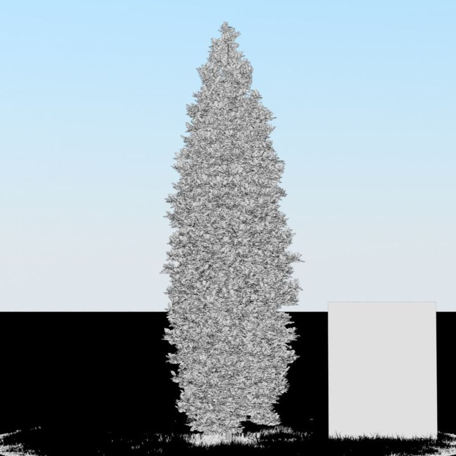 Thuja Tree 05 royalty-free 3d model - Preview no. 4