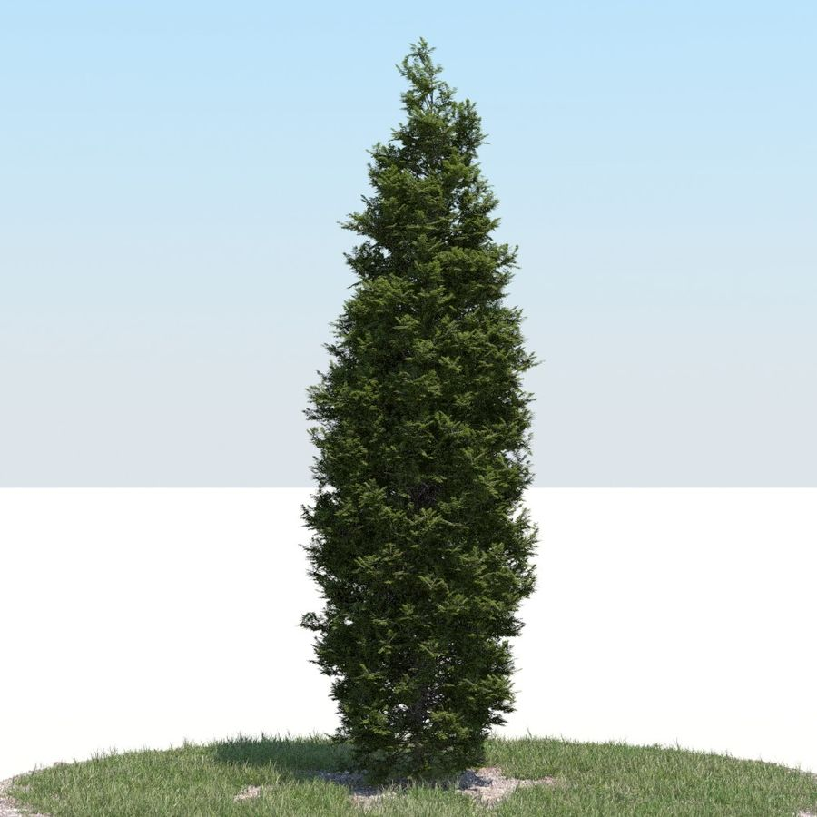 Thuja Tree 05 royalty-free 3d model - Preview no. 2
