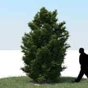 Thuja Tree 04 3d model