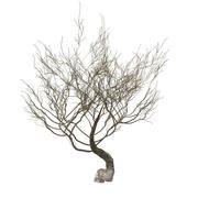 Woestijn droge boom 3d model
