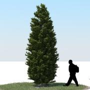 Thuja Tree 02 3d model