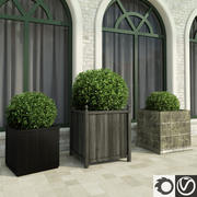 Bushes in Boxes 3d model
