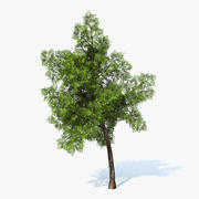 Generic Tree 02 3d model