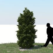 Thuja Tree 09 3d model