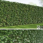 Rich Ivy 3d model