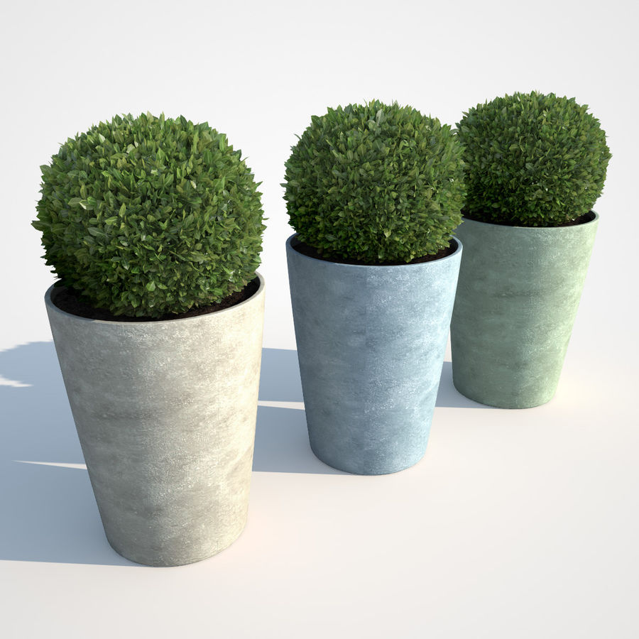 Shrubs in Pots 7 royalty-free 3d model - Preview no. 2