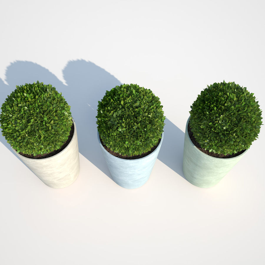 Shrubs in Pots 7 royalty-free 3d model - Preview no. 4
