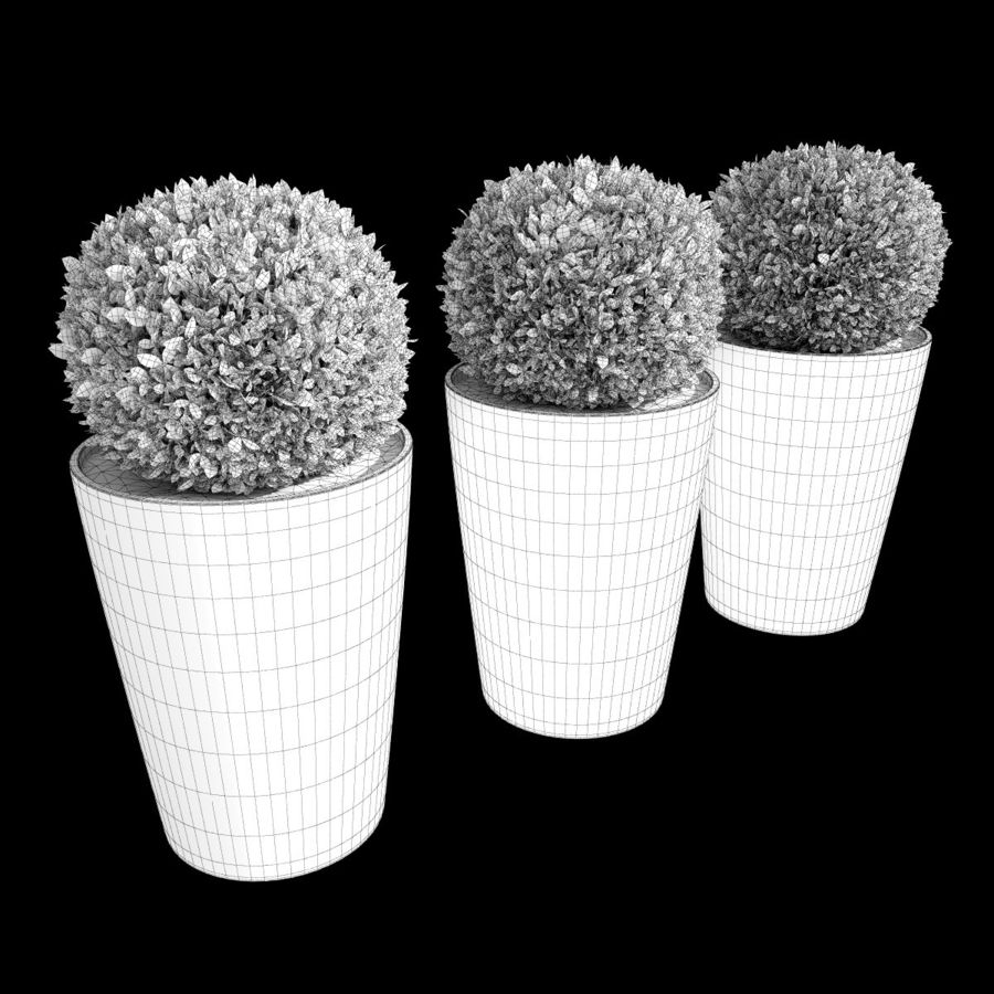Shrubs in Pots 7 royalty-free 3d model - Preview no. 6