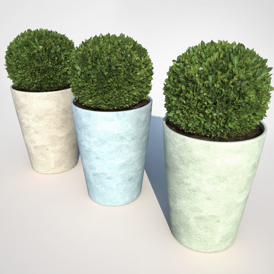 Shrubs in Pots 7 royalty-free 3d model - Preview no. 3