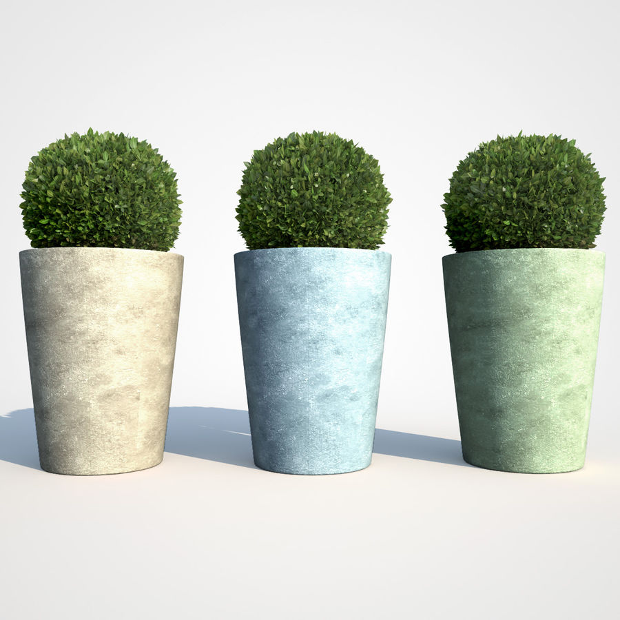 Shrubs in Pots 7 royalty-free 3d model - Preview no. 5