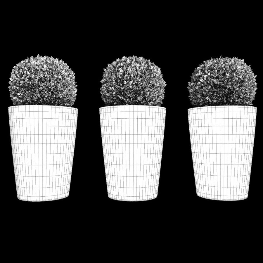 Shrubs in Pots 7 royalty-free 3d model - Preview no. 9