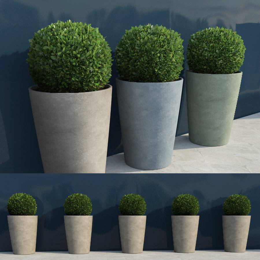 Shrubs in Pots 7 royalty-free 3d model - Preview no. 1