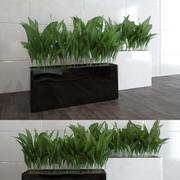 Contemorary Plants 3d model