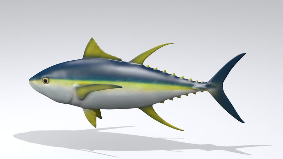 Yellowfin Tuna 3d Model With Poses 3d Model 20 Oth Obj Free3d