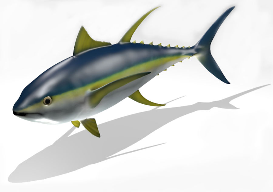 Yellowfin Tuna 3D Model with Poses 3D Model $20 - .oth .obj - Free3D