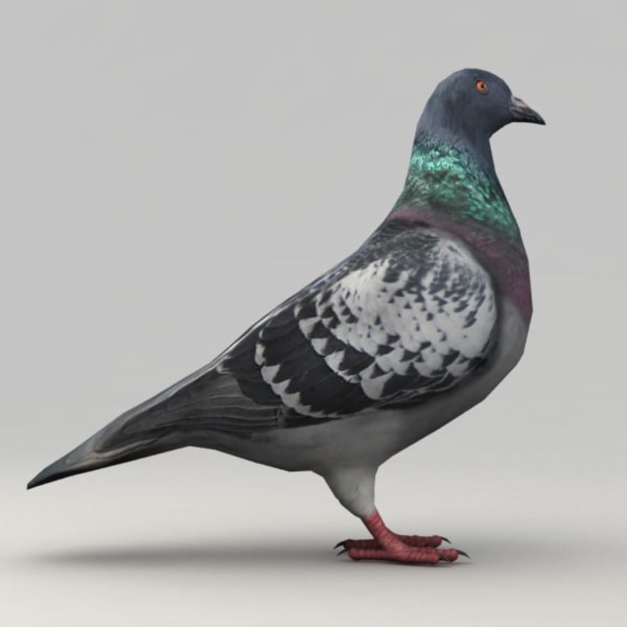 Pigeon rigged royalty-free 3d model - Preview no. 4