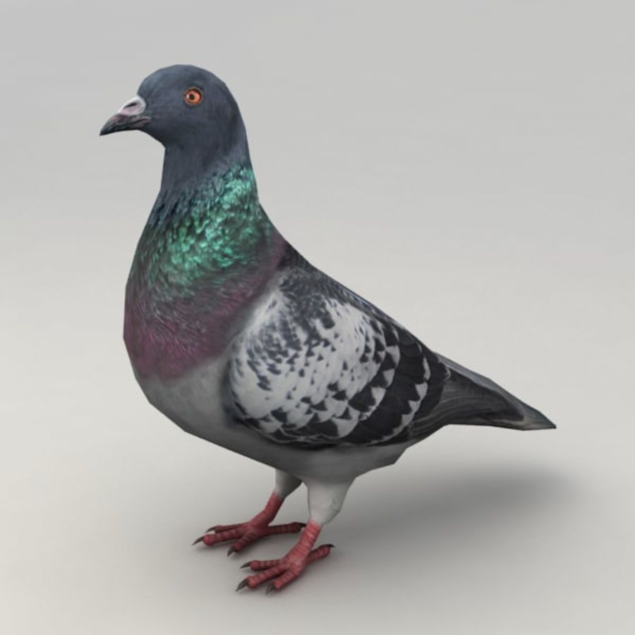 Pigeon rigged royalty-free 3d model - Preview no. 2