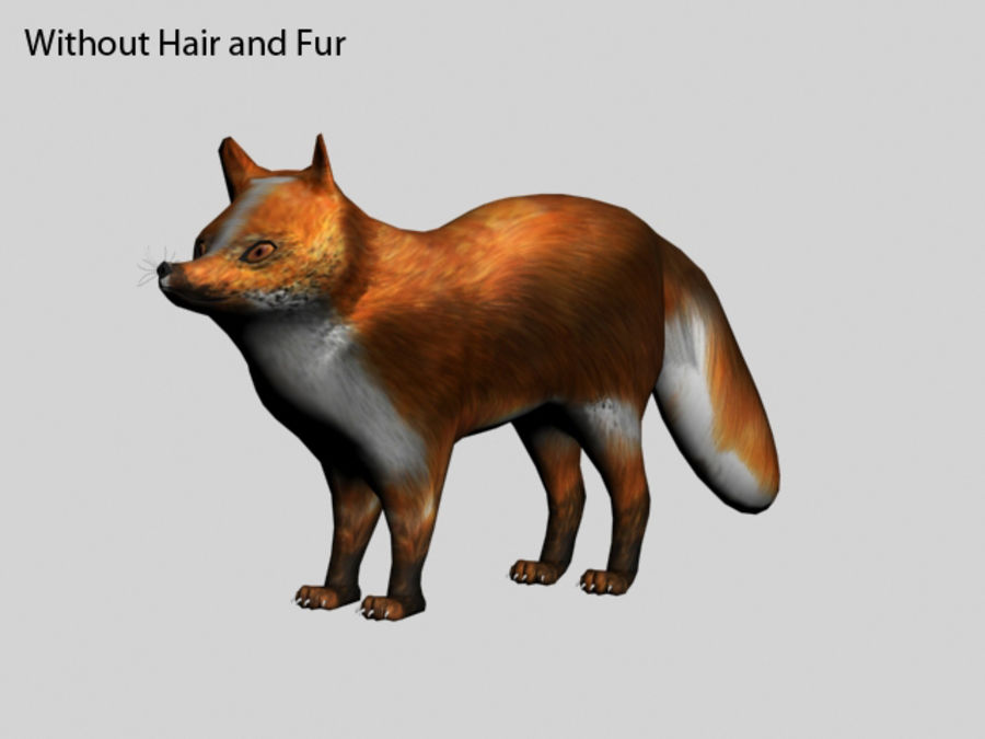 Fuchs royalty-free 3d model - Preview no. 6