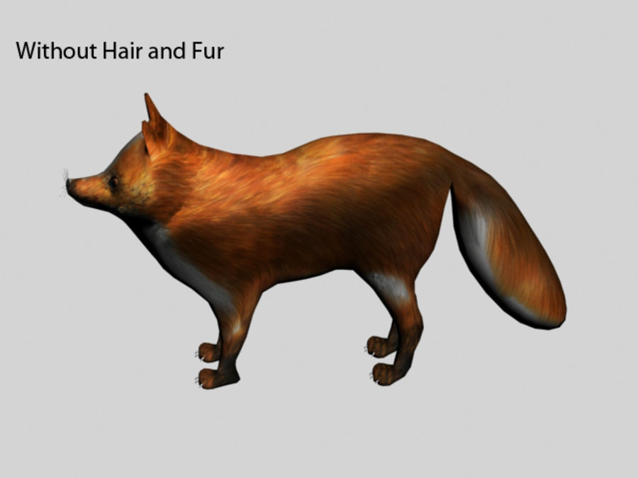 Fuchs royalty-free 3d model - Preview no. 8