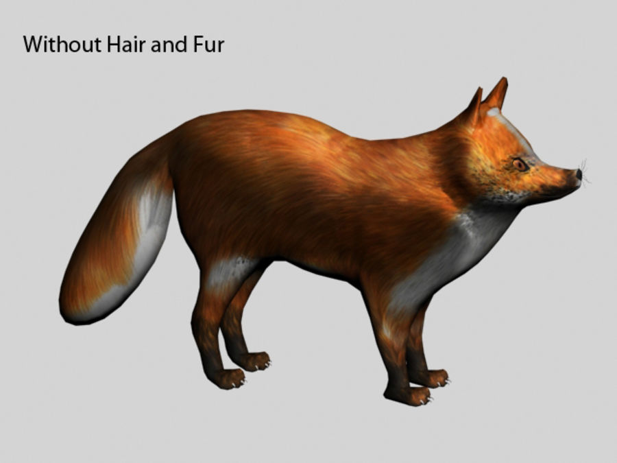 Fuchs royalty-free 3d model - Preview no. 7