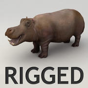 Hippo lowpoly rigged model 3d model