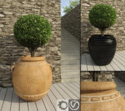 Boxwoods in Rustic Pots 3d model