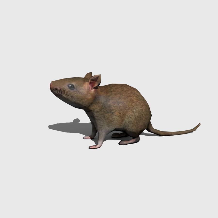 Rat royalty-free 3d model - Preview no. 3