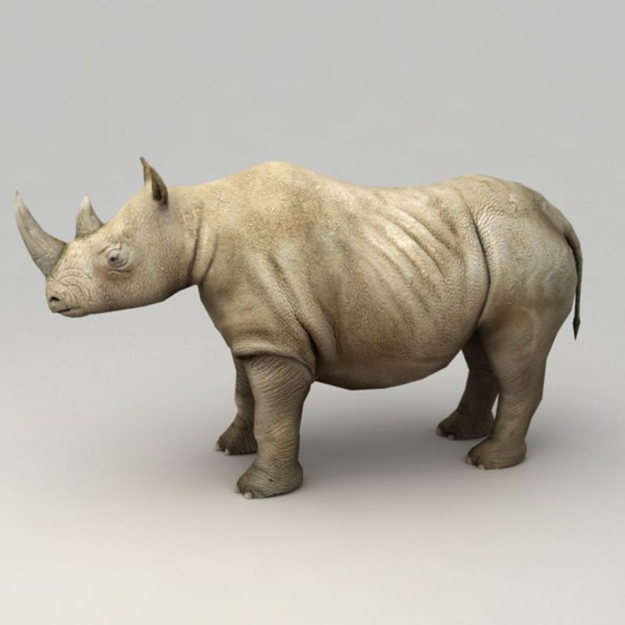 Rhino rigged model royalty-free 3d model - Preview no. 2