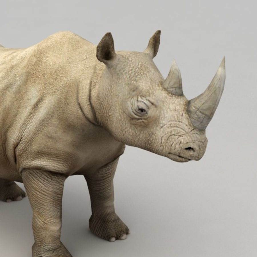Rhino rigged model royalty-free 3d model - Preview no. 4