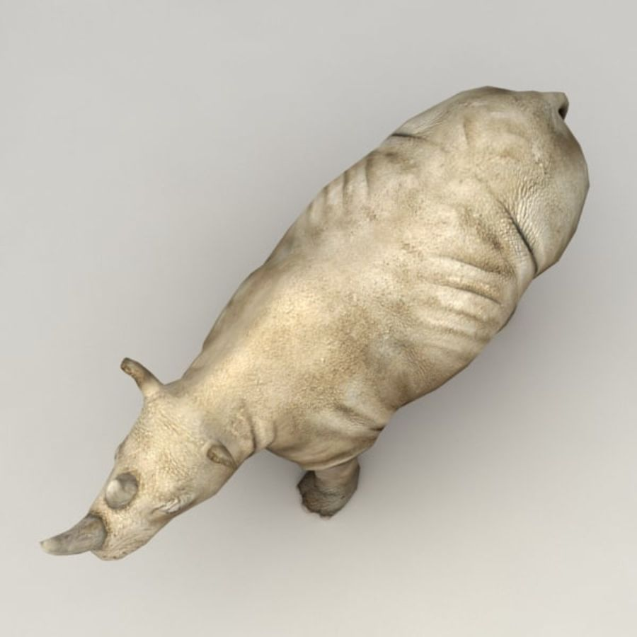 Rhino rigged model royalty-free 3d model - Preview no. 6