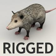 Opossum rigged 3d model