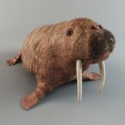 Walrus (obj, fbx, max) 3d model