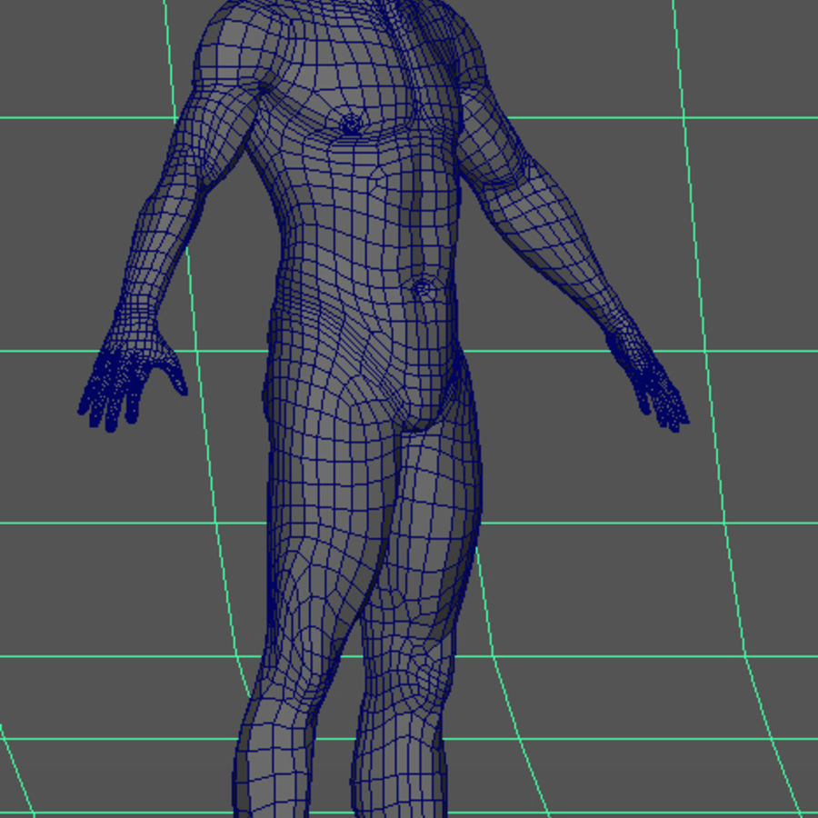 Human Male Base Mesh royalty-free 3d model - Preview no. 24