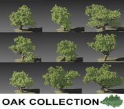 Oak Collection 3d model