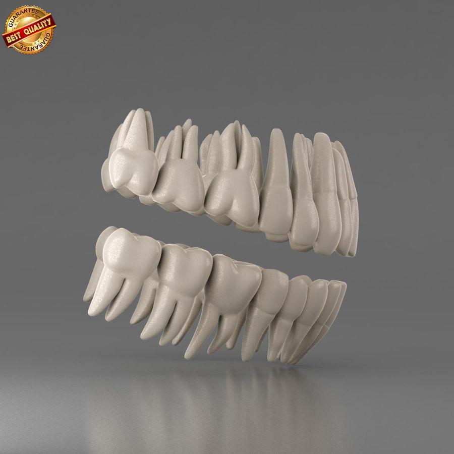 人間の歯 royalty-free 3d model - Preview no. 4