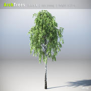ArchTrees Birch (A) 3d model