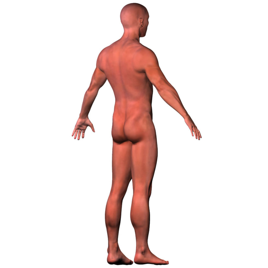 Malla de base masculina royalty-free modelo 3d - Preview no. 11
