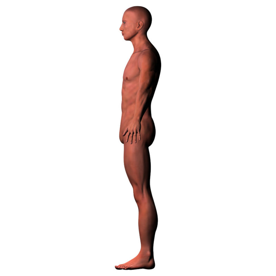 Malha Base Masculina royalty-free 3d model - Preview no. 10
