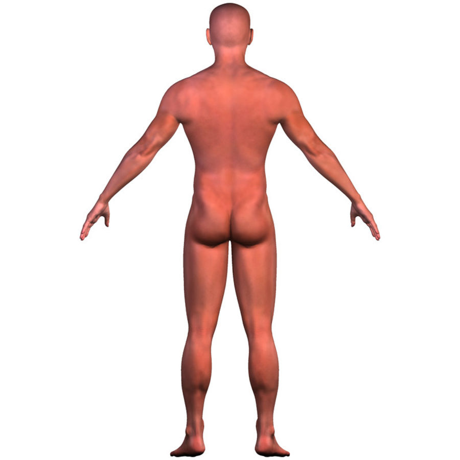Malla de base masculina royalty-free modelo 3d - Preview no. 12