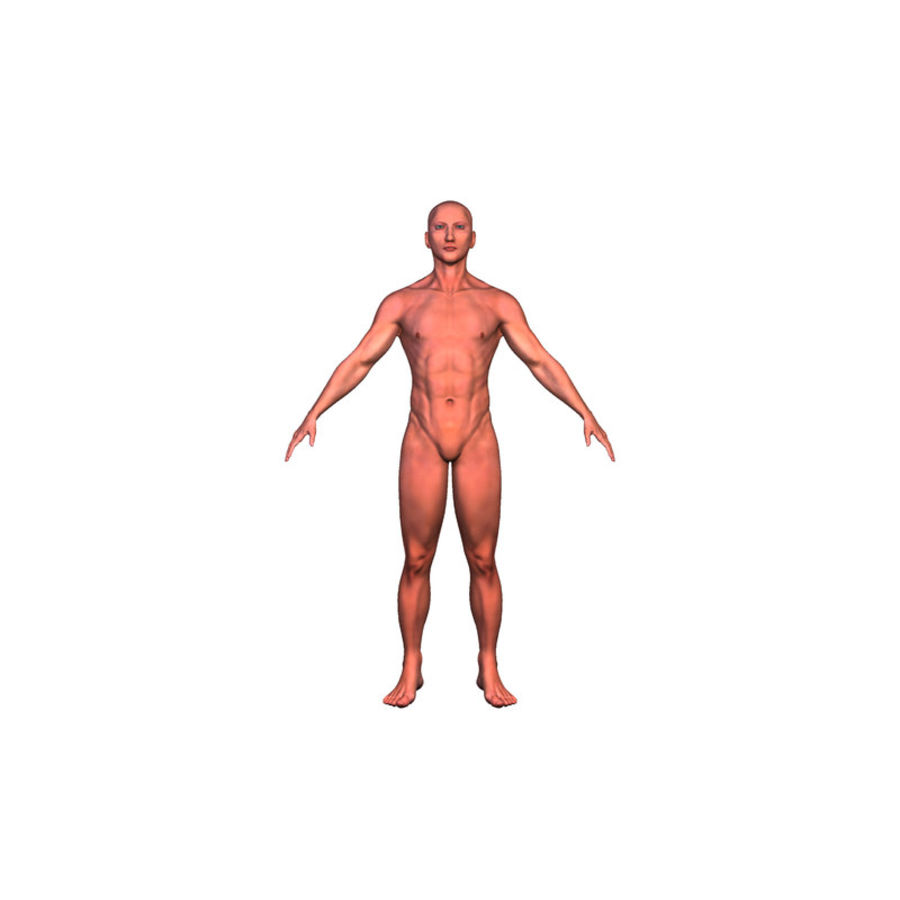 Malha Base Masculina royalty-free 3d model - Preview no. 22